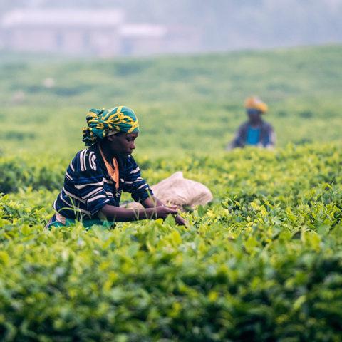Rule of Law Quick Scan Rwanda